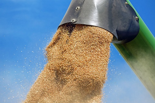 cereales-de-trigo
